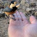 Photos: 弥勒山山頂でヤマガラに手の上のピーナッツやりに成功! - 6