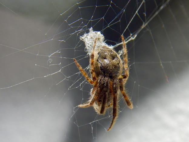 アピタ高蔵寺店にいた蜘蛛 - 2