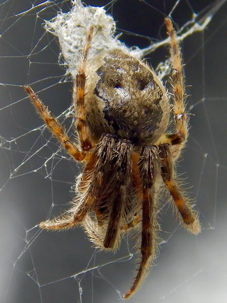 アピタ高蔵寺店にいた蜘蛛 - 3
