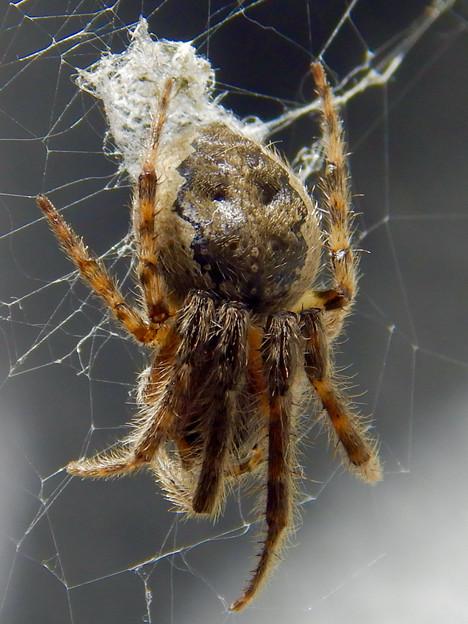アピタ高蔵寺店にいた蜘蛛 - 4