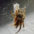 Photos: アピタ高蔵寺店にいた蜘蛛 - 5