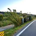 Photos: 庄内川沿いにある下津尾渡し跡 - 3