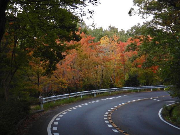 小幡緑地公園本園沿いの紅葉した木々 - 1