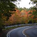 Photos: 小幡緑地公園本園沿いの紅葉した木々 - 1
