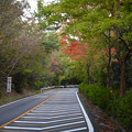 Photos: 小幡緑地公園本園沿いの紅葉した木々 - 2