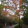 Photos: 小幡緑地公園本園沿いの紅葉した木々 - 3