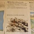 Photos: 小幡緑地公園本:白沢川砂防事業の説明や碑文 - 4(明治頃までの山地の説明)