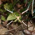 Photos: クロスに隠れ帯を作っていた小さな蜘蛛 - 2