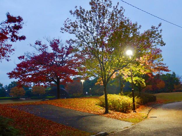 桃花台中央公園の紅葉