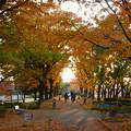 Photos: ふれあい緑道の紅葉