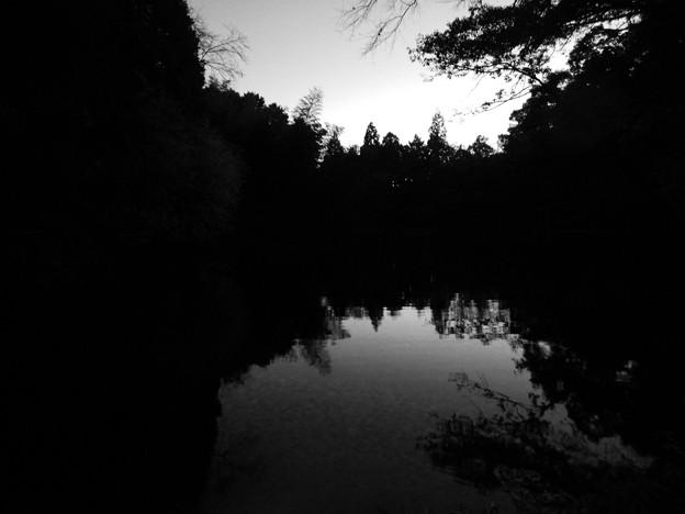 トワイライトタイムの柿の木池 - 2:モノクロ