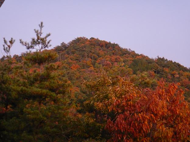大谷山の送電線鉄塔下 - 3:紅葉した道樹山山頂
