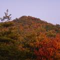 Photos: 大谷山の送電線鉄塔下 - 3:紅葉した道樹山山頂