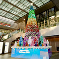 Photos: ゲートタワー前のクリスマスツリー 2020 No - 1