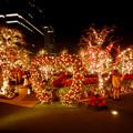 Photos: 大名古屋ビルヂング スカイガーデンのクリスマスイルミネーション 2020 No - 2