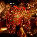 大名古屋ビルヂング スカイガーデンのクリスマスイルミネーション 2020 No - 5