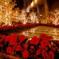 Photos: 大名古屋ビルヂング スカイガーデンのクリスマスイルミネーション 2020 No - 15