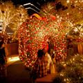 Photos: 大名古屋ビルヂング スカイガーデンのクリスマスイルミネーション 2020 No - 16