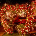 大名古屋ビルヂング スカイガーデンのクリスマスイルミネーション 2020 No - 4