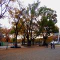 白川公園の紅葉 - 3