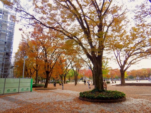 白川公園の紅葉 - 4