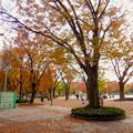 Photos: 白川公園の紅葉 - 4