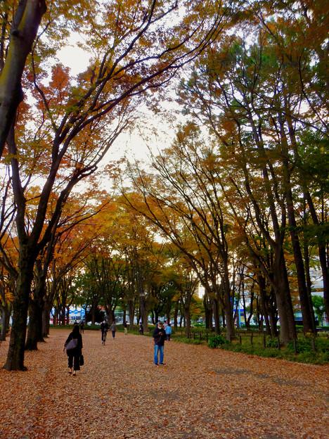白川公園の紅葉 - 7