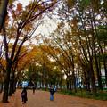 Photos: 白川公園の紅葉 - 7