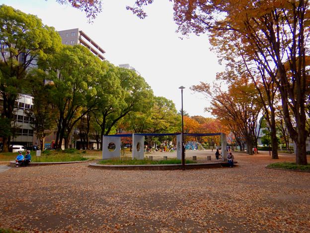 白川公園の紅葉 - 1
