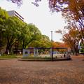 Photos: 白川公園の紅葉 - 1