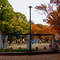 白川公園の紅葉 - 2