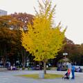 Photos: 白川公園の紅葉 - 6