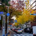 Photos: 広小路通の紅葉