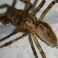 白い壁にいた茶色い蜘蛛 - 2