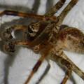 白い壁にいた茶色い蜘蛛 - 3