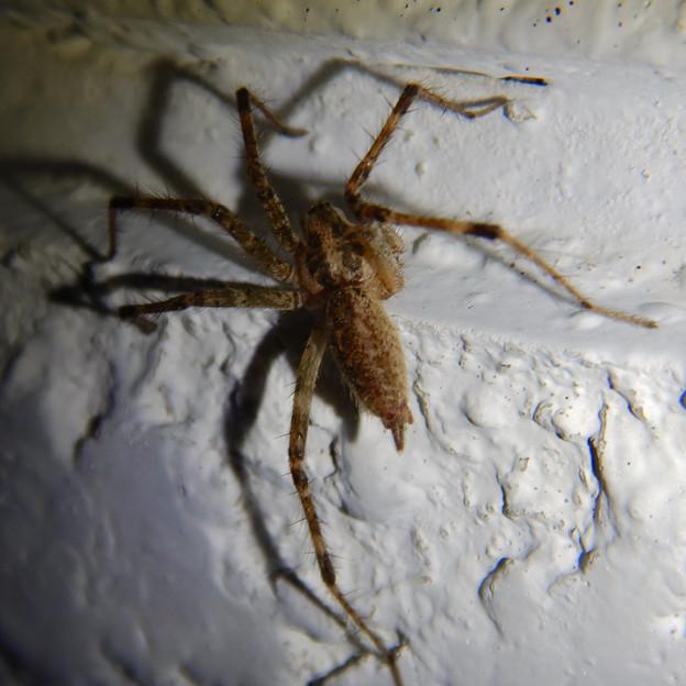 白い壁にいた茶色い蜘蛛 - 10