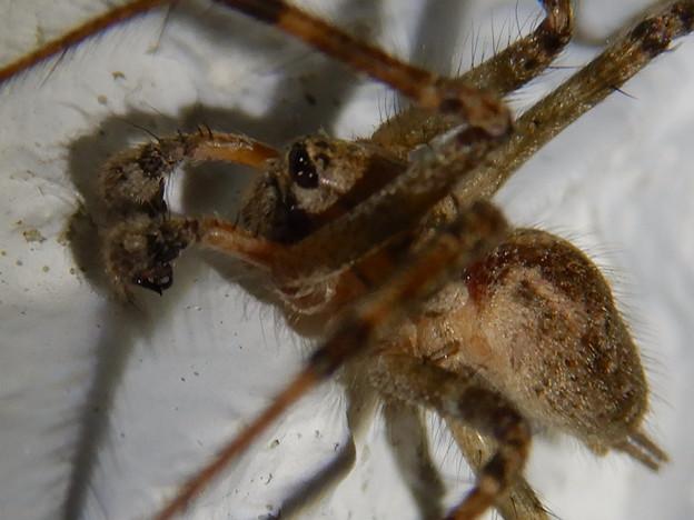 白い壁にいた茶色い蜘蛛 - 12