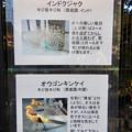 Photos: グリーンピア春日井 動物ふれあい広場で飼育されてる動物 - 2:インドクジャク、オウゴンキンケイ