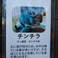 Photos: グリーンピア春日井 動物ふれあい広場で飼育されてる動物 - 9:チンチラ