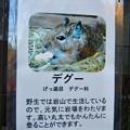 Photos: グリーンピア春日井 動物ふれあい広場で飼育されてる動物 - 10:デグー