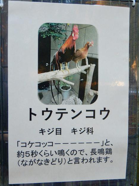 グリーンピア春日井 動物ふれあい広場で飼育されてる動物 - 11:トウテンコウ