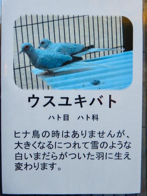 グリーンピア春日井 動物ふれあい広場で飼育されてる動物 - 12:ウスユキバト
