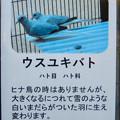 Photos: グリーンピア春日井 動物ふれあい広場で飼育されてる動物 - 12:ウスユキバト