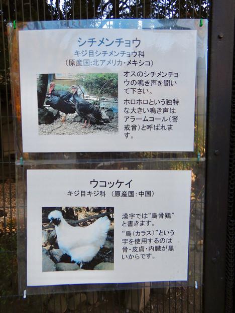 グリーンピア春日井 動物ふれあい広場で飼育されてる動物 - 1:シツメンチョウ、ウコッケイ