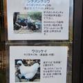 Photos: グリーンピア春日井 動物ふれあい広場で飼育されてる動物 - 1:シツメンチョウ、ウコッケイ
