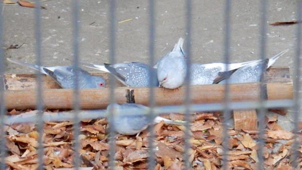 Photos: グリーンピア春日井 動物ふれあい広場の動物 - 33:ウスユキバト
