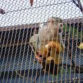 Photos: グリーンピア春日井 動物ふれあい広場の動物 - 47:コモンリスザル