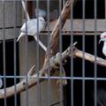 Photos: グリーンピア春日井 動物ふれあい広場の動物 - 36:ウスユキバト