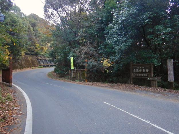 定光寺自然休養林 入り口(定光寺側)- 1