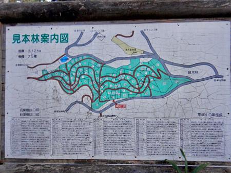 定光寺自然休養林:見本林案内図